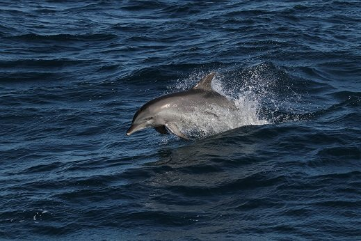 Whale One dolphin discovery cruises