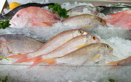 Fresh wild caught fish